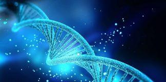 https://www.futura-sciences.com/sante/definitions/medecine-adn-87/